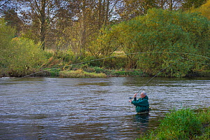 Fisherman standing waist deep and casting in the River Teviot, near Kelso, Roxburghshire, Scotland, UK, October 2011  -  Rob Jordan / 2020VISION