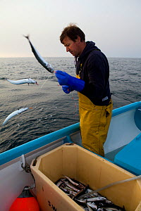 Fisherman handlining for Atlantic mackerel (Scomber scombrus) from a small boat, Newlyn, Cornwall, England, UK, 2011  -  Toby Roxburgh / 2020VISION