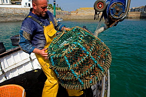 Fisherman sinking a basket of freshly caught Spiny spider crabs (Maja squinado) from 'Rhiannon', a crabber based in Porthleven, he will retrieve the basket later when the buyer is ready to collect, Co... - Toby Roxburgh / 2020VISION