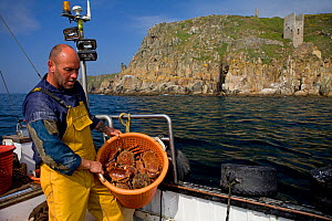 Fisherman with a full basket of Edible crabs (Cancer pagurus) and Spiny spider crabs (Maja squinado), caught using pots, with an old tin mine on cliffs in the background, Trewavas Head, Cornwall, Engl...  -  Toby Roxburgh / 2020VISION