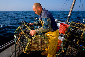 Fisherman hauling lobster pots onto his boat, Cornwall, England, UK, April 2011 Model released  -  Toby Roxburgh / 2020VISION