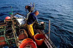 Fisherman hauling lobster pots onto his boat 'Rhiannon', Cornwall, England, UK, April 2011 Model released  -  Toby Roxburgh / 2020VISION