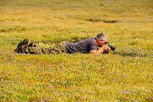 Photographer Terry Whittaker photographing Common sea lavender (Limonium vulgare) growing on regenerated saltmarsh habitat whilst on assignment for 2020VISION, Abbotts Hall Farm Nature Reserve, Englan... - Terry Whittaker / 2020VISION