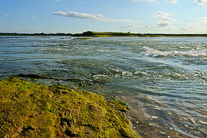 Tide rushing through a purposefully made breach in a sea wall, such breaches are part of the regeneration of saltmarsh landscape, providing both a rich wildlife habitat and greater flood protection fr... - Terry Whittaker / 2020VISION