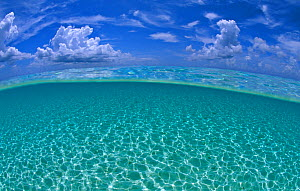 A split level view of shallow water and clouds in summer, Seven Mile Beach, Grand Cayman, Cayman Islands, British West Indies. Caribbean Sea. - Alex Mustard