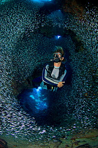 Diver swimming through dense school of Silversides (Atherinidae)  inside a coral cavern, Grand Cayman, Cayman Islands, British West Indies, Caribbean Sea. Model released  -  Alex Mustard