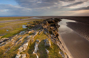 Limestone outcrop on edge of mudflats, Humphrey Head, Morecambe Bay, Cumbria, England, UK, February - Peter Cairns / 2020VISION