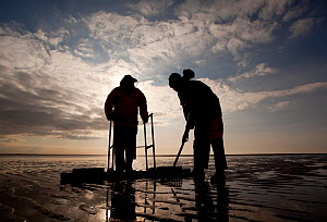 Cockle fishermen working in Morecambe Bay, Cumbria, England, UK, February. Model released - Peter Cairns / 2020VISION
