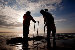 Cockle fishermen working in Morecambe Bay, Cumbria, England, UK, February. Model released. Did you know? Cockles are able to jump by bending and straightening their feet. - Peter Cairns / 2020VISION
