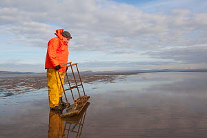 Cockle fisherman working in Morecambe Bay, Cumbria, England, UK, February. Model released. - Peter Cairns / 2020VISION