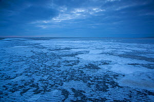 Ice on mudflats, Morecambe Bay, Silverdale, Cumbria, England, UK, February - Peter Cairns / 2020VISION