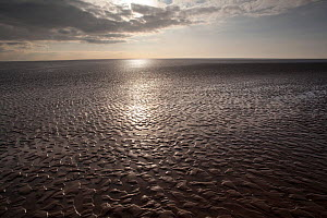 Sunlight reflecting on mudflats, Morecambe Bay, Cumbria, England, UK, February - Peter Cairns / 2020VISION