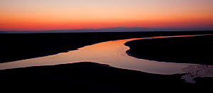 Panoramic view of estuarine river inlet running across mudflats at dawn, Morecambe Bay, Cumbria, England, UK, February - Peter Cairns / 2020VISION