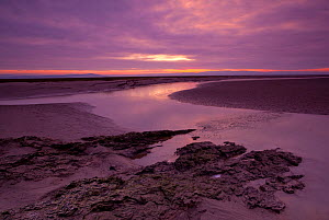Estuarine river inlet running across mudflats at dawn, Morecambe Bay, Cumbria, England, UK, February. 2020VISION Exhibition. - Peter Cairns / 2020VISION
