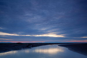 Estuarine river inlet running across mudflats at dawn, Morecambe Bay, Cumbria, England, UK, February - Peter Cairns / 2020VISION