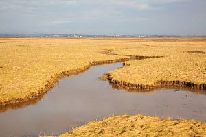 View over South Walney saltmarsh towards Barrow-in-Furness, Cumbria, England, UK, February - Peter Cairns / 2020VISION
