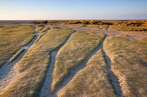 Eroding sand dune landscape and limestone outcrop on edge of Kent Estuary, Morecambe Bay, Cumbria, England, UK, February - Peter Cairns / 2020VISION