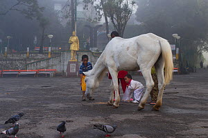 Morning scene with children feeding lone horse and pigeons, Darjeeling, West Bengal, India 2010  -  Dr. Axel Gebauer