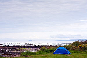 Tent beside beach at Seal Shore Campsite, Kildonan, Arran, Scotland, August 2011.  -  Merryn Thomas