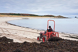 Farmer on tractor collecting seaweed for his vineyard. Par Beach, St. Martin's, Isles of Scilly, UK, January 2011.  -  Merryn Thomas