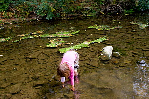 Girl playing in River Onny,understanding nature by gathering river stones in order to make oven to make pizzas,Shropshire,England,UK, 2011  -  David Woodfall