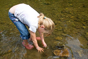 Girl playing in River Onny,understanding nature by gathering river stonesmake oven for pizzas,Shropshire,England, UK 2011  -  David Woodfall