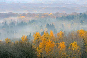 Landscape view of Vosges Forest at dawn, France, November 2011.  -  Fabrice Cahez