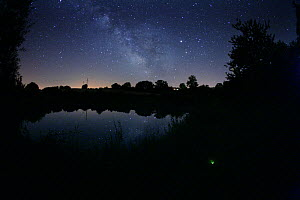 Lake at night with band of the Milky Way overhead and Glow worm (Lampyris noctiluca) in foreground. Lilhac, near Toulouse, Haute Garonne, France, July.  -  Martin Dohrn