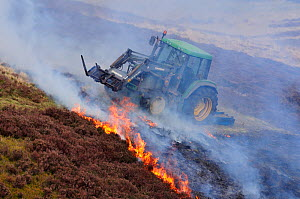 Muir burning - controlled burning of heather in spring, Lammermuir Hills, East Lothian, Scotland, April 2009 - Laurie Campbell