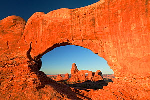Turret Arch as seen through the North Window Arch, Arches National Park, Colorado Plateau, Utah, USA, September 2010 - Ingo Arndt
