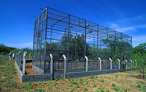 Bird cages at the Ararinha Azul project (Little blue macaw project) Curaca, Bahia, Brazil, for the breeding and ultimate release of captive Spix's macaw (Cyanopsitta spixii) Critically endangered spec...  -  Roland Seitre