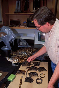 Barry Baker, herpatologist, analysing turtleshell artefacts and samples of turtle shell at the National Fish and Wildlife Forensics Laboratory, Ashland, Oregon, USA  -  Roland Seitre