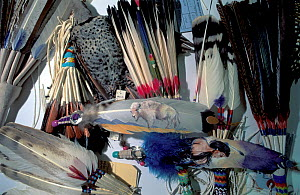 Indian artefact feather products for examination at the National Fish and Wildlife Forensics Laboratory, Ashland, Oregon, USA  -  Roland Seitre