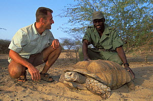 Antoine Cadi, scientist, and Andrea Gomis, director of the reserve, study an African spurred tortoise (Centrochelys / Geochelone sulcata) Sahel desert, Ferlo North Reserve, Senegal, West Africa, Vulne...  -  Roland Seitre