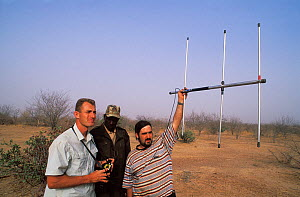 Antoine Cadi, scientist, and others radio tracking a tagged African spurred tortoise (Centrochelys / Geochelone sulcata) Sahel desert, Ferlo North Reserve, Senegal, West Africa, Vulnerable species. Fi...  -  Roland Seitre