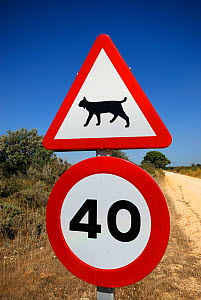 Road sign warning drivers to watch their speed in areas inhabited by the Iberian / Spanish Lynx (Lynx pardina). Sierra Morena, Andalusia, Spain, June 2007.  -  Roland Seitre