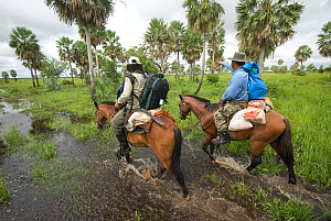 Two conservation officers riding through wetland habitat looking out for the Critically endangered Blue throated / Wagler's macaw (Ara glaucogularis) Beni, Trinidad, Bolivia, January 2007  -  Roland Seitre