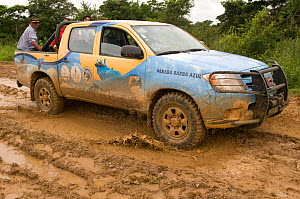 Conservation officers on muddy road during survey of Blue throated / Wagler's macaw (Ara glaucogularis) Trinidad, Beni, Bolivia, Critically endangered species, January 2008.  -  Roland Seitre