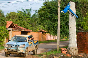 Conservation officers drive past model of Blue throated / Wagler's macaw (Ara glaucogularis) Trinidad, Beni, Bolivia, Critically endangered species, January 2008.  -  Roland Seitre