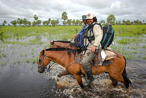 Conservation officer, Hernan Vargas Ayala, and his assistant riding through wetlands on survey of the Critically endangered, Blue throated macaw (Ara glaucogularis) Trinidad, Beni, Bolivia, January 20...  -  Roland Seitre
