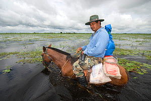 Conservation officer, Hernan Vargas Ayala and his assistant riding horses through wetlands on survey of the Critically endangered, Blue throated macaw (Ara glaucogularis) Trinidad, Beni, Bolivia, Janu...  -  Roland Seitre