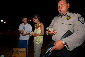 Veterinarian Mar Carascos and volunteer aided by policeman in inspecting Yellow-shouldered Amazons (Amazona barbadensis), part of a conservation project on the island. Isla Margarita, Nueva Esparta, V...  -  Roland Seitre