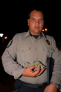 Policeman holding a young Yellow-shouldered amazon parrot (Amazona barbadensis) removed from nest box for inspection, part of a conservation project. Isla Margarita, Nueva Esparta, Venezuela, 2007.  -  Roland Seitre