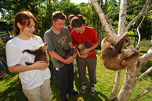 Volunteers exercising young Two-toed Sloths (Choloepus hoffmanni) at the sloth orphanage.   Aviarios del Caribe Sloth Refuge, Costa Rica, 2008.  -  Roland Seitre