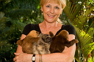 Brown-throated Three Toed Sloth (Bradypus variegatus) and Hoffmann's Two Toed Sloths (Choloepus hoffmanni) babies held by orphanage owner, Judy Avey-Arroyo. Aviarios del Caribe Sloth Refuge, Costa Ric...  -  Roland Seitre