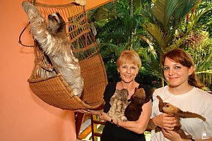 Brown-throated Three Toed Sloth (Bradypus variegatus) and Hoffmann's Two Toed Sloths (Choloepus hoffmanni) babies held by  orphanage owner, Judy Avey-Arroyo and a volunteer as an older three-toed slot...  -  Roland Seitre