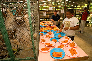 People preparing meals for the sloths at the sanctuary, Aviarios del Caribe Sloth Refuge, Costa Rica, 2008.  -  Roland Seitre