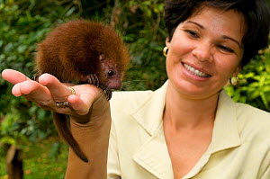 Baby Rothschild's Porcupine (Coendou rothschildi) on the palm of conservation volunteer. La Marinas Wildlife Rescue Centre, Costa Rica, 2008.  -  Roland Seitre