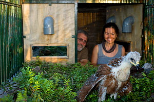 Apparatus set up for the release of Spanish Imperial Eagles (Aquila adalberti). Chicks use the artificial nest and food is delivered through the tubes to minimise human contact. Cadix, Sandra Moreno,...  -  Roland Seitre