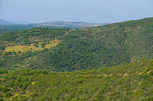 Wooded landscape of Sierra Morena, habitat of the Spanish Imperial Eagle. Andujar, Andalusia, Spain, January 2007.  -  Roland Seitre